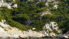 Flora of the Mediterranean rocks