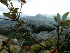 Flora w Parku Narodowym Lovcen