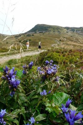 Trail up to the peak of Tarnica in Bieszczady (1 346 m a.s.l.)