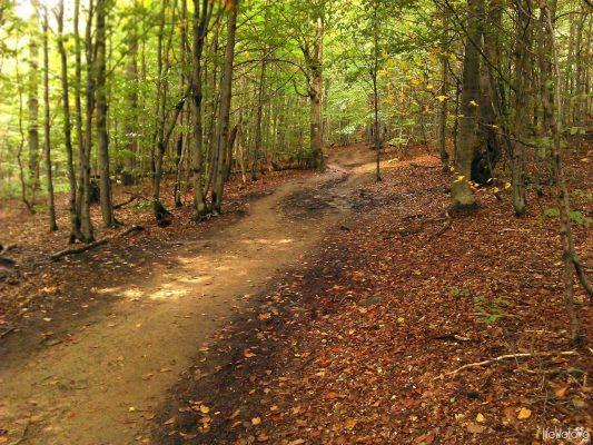 Forest path up to the Polonina Caryńska