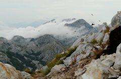 Kraina Sveti Jure