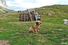 Leo from Durmitor