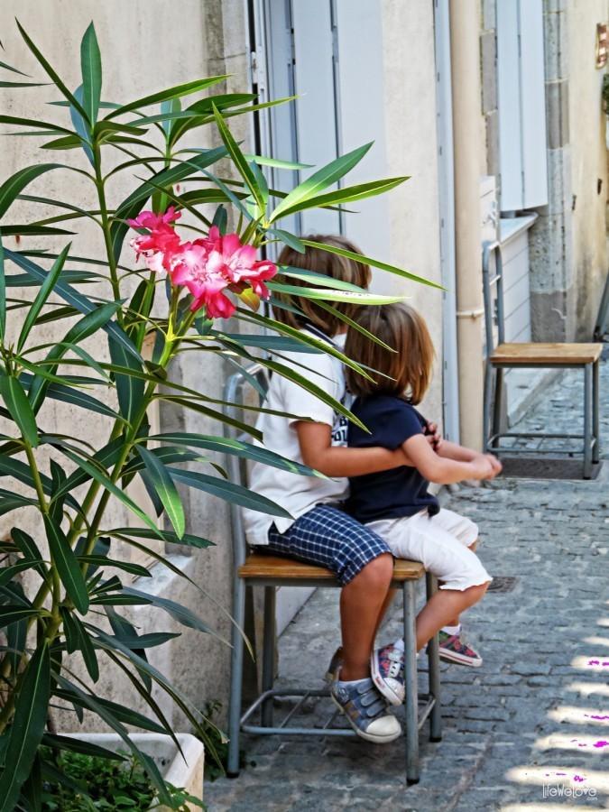 Kwiat w Carcassonne