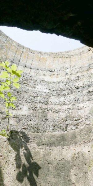 Tree in a bunker