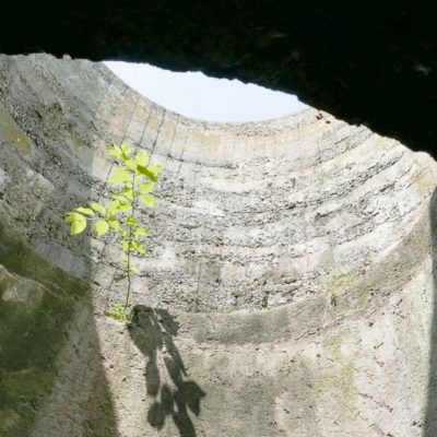Tree in a bunker