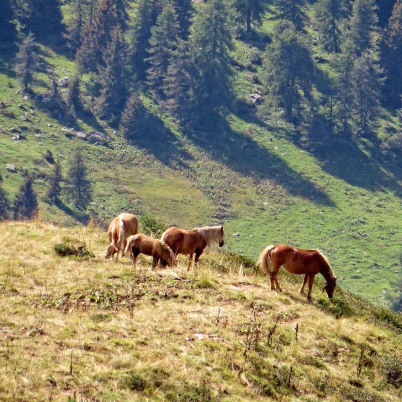 Horses on a Croce Domini Pass