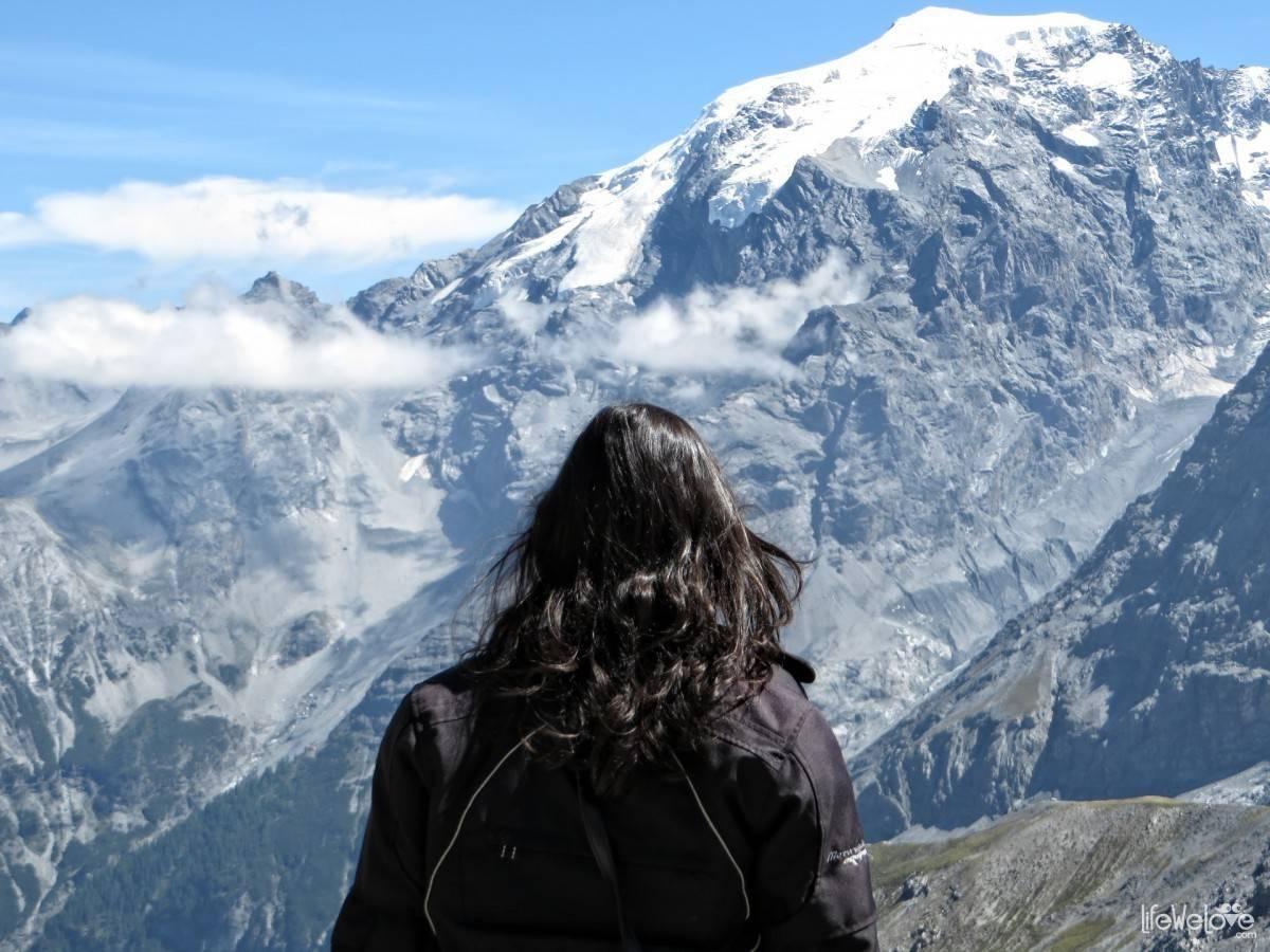 Liwia na przełęczy Stelvio