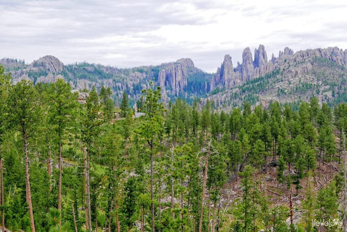The Black Hills and the Needles Highway