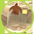 Gniazda plażowe