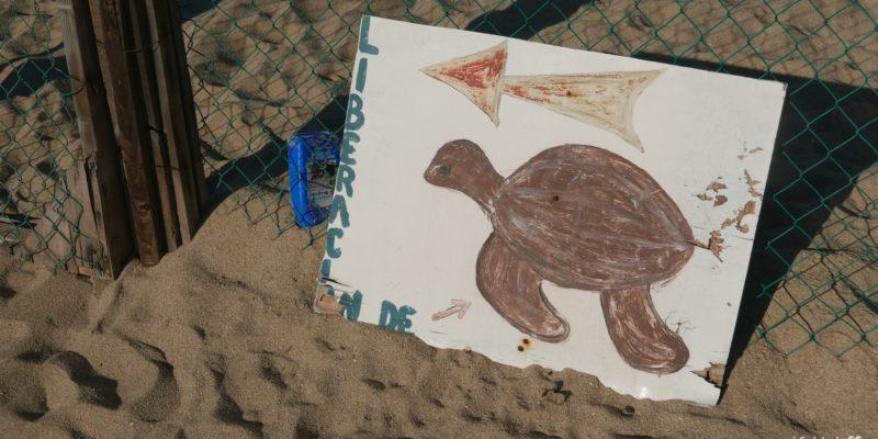 Młode żółwiki narodziny na plaży