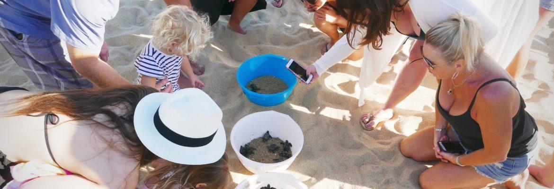 Żółwie wyklute na plaży w Meksyku