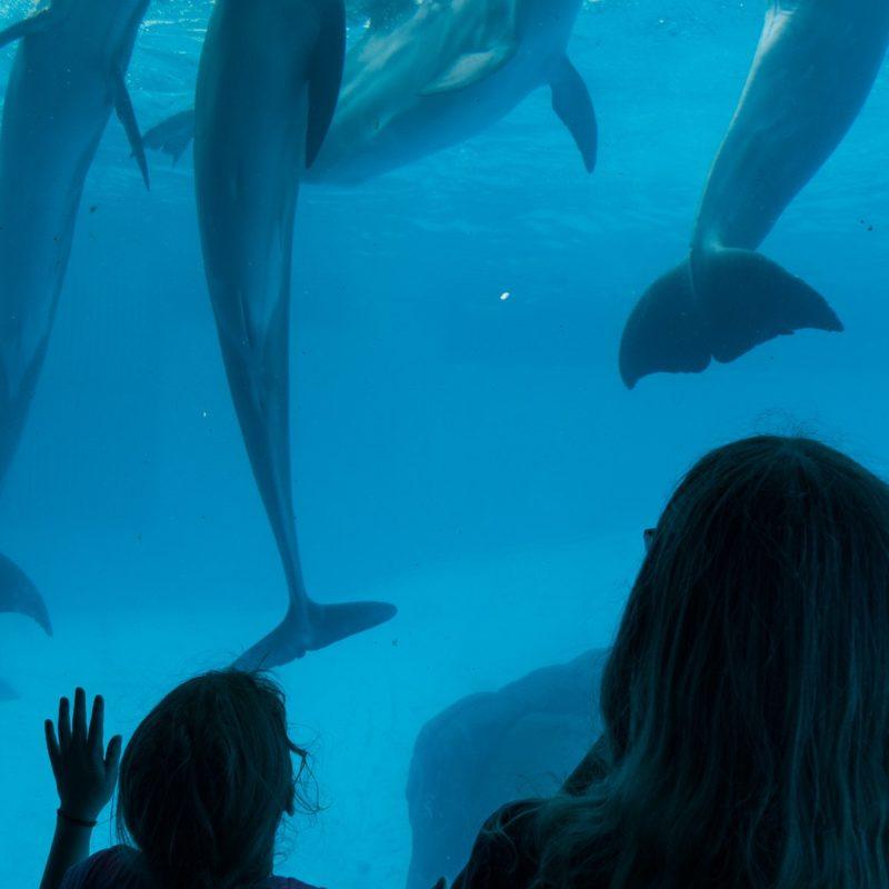 Aquarium w Teksasie