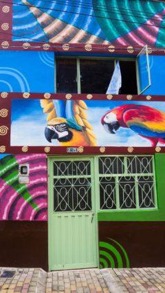 colombia-guacamayas-dia-de-las-velitas-2