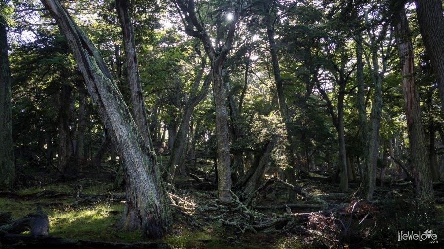 Las na końcu świata