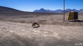 Granica Bolivia Chile