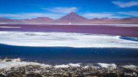 Laguna Colorada Bolivia