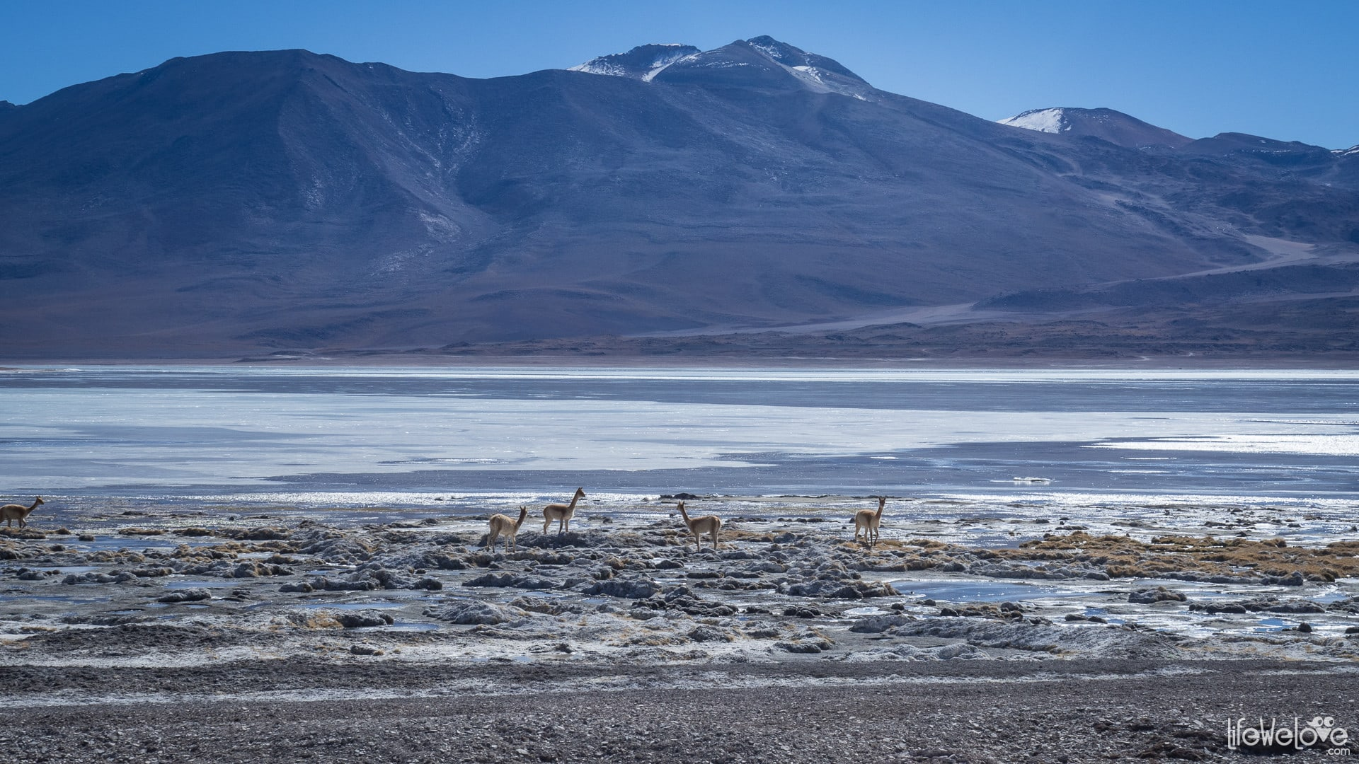 Laguna Blanca w Boliwii
