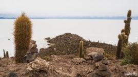 Salar de Uyuni - Isla Incahuasi
