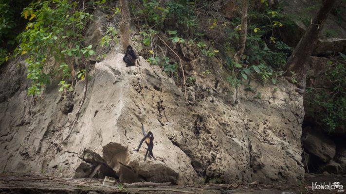 Monkeys in Sumidero Canyon