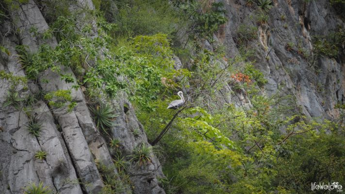 Sumidero Canyon, Mexico, Chiapas